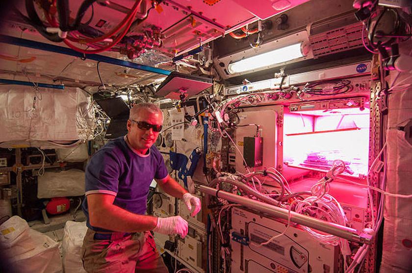 Εντυπωσιακό! Δείτε το πρώτο λουλούδι που φύτρωσε στο διάστημα! (photos)