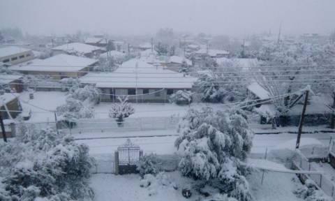 Καιρός: Κλειστά τα σχολεία στη Φθιώτιδα – Δείτε πού έχει φτάσει το χιόνι στη Λαμία (pics)