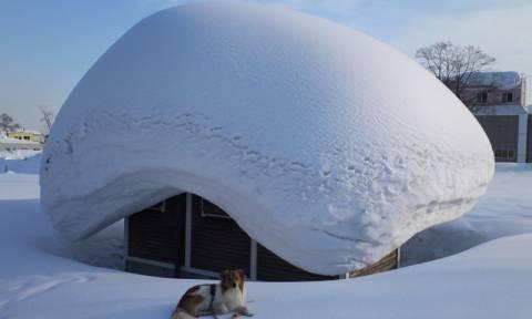 Δεν έχετε ξαναδεί τόσο χιόνι σε μια νύχτα (Vid)