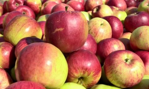 Россельхознадзор уничтожил более полутонны санкционных фруктов под Новосибирском