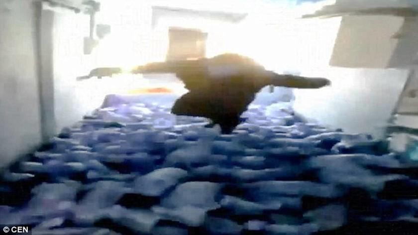 Βίντεο – σοκ: Υπέρβαρος συνθλίβει μέχρι θανάτου γουρουνάκια πηδώντας πάνω τους!