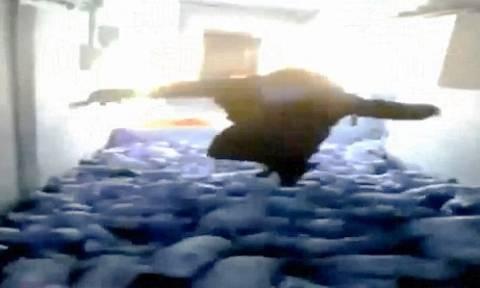 Βίντεο – σοκ: Υπέρβαρος συνθλίβει γουρουνάκια μέχρι θανάτου πηδώντας πάνω τους!
