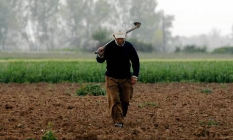 Πότε καταβάλλονται από τον ΕΛΓΑ οι αποζημιώσεις για ζημιές σε αγρότες