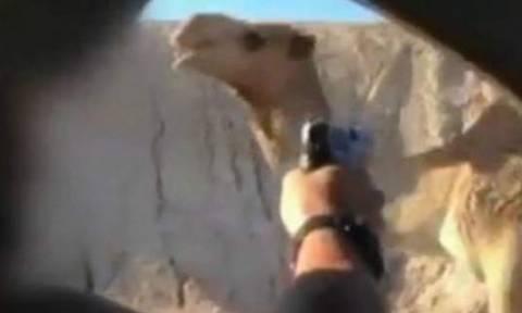Στρατιώτης καταδικάστηκε σε φυλάκιση 4 μηνών επειδή σκότωσε μια καμήλα (vid)