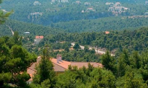 ΣτΕ: Φραγμοί στους επίδοξους καταπατητές δασών και δασικών εκτάσεων