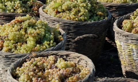 Ρυθμίσεις μόνο για φέτος σε οινοπαραγωγούς για τον φόρο στο κρασί