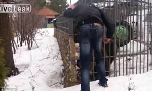 Σκληρές εικόνες: Προκάλεσε την τύχη του βάζοντας το χέρι του στο κλουβί μιας αρκούδας (vid)