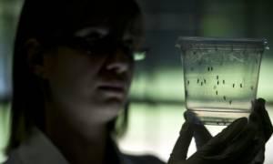 Συναγερμός στην Κολομβία: Περισσότερα από 20.000 κρούσματα του ιού Ζίκα
