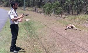 Σοκ: Ασυνείδητος οδηγος χτύπησε με το αμάξι του 17 καγκουρό στην Αυστραλία