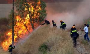 Λαμία: Συναγερμός για φωτιά κοντά σε πλατανόδασος