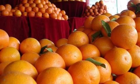 Χαλάνδρι: Διανομή πορτοκαλιών σε ευπαθείς κοινωνικές ομάδες