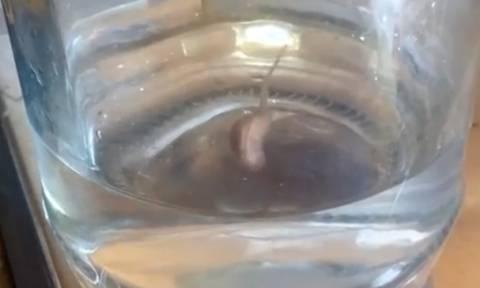 Προσοχή! Αυτό το παράξενο πλάσμα μπορεί να βγει από τη βρύση σας - Kανείς δεν ξέρει τι είναι (video)