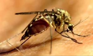 Το Πεκίνο επιβεβαίωσε το πρώτο κρούσμα του ιού Ζίκα