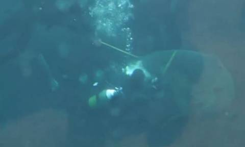 Βίντεο – σοκ: Καρχαρίας επιτίθεται σε δύτη μέσα στο ενυδρείο!
