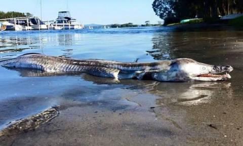 Μυστηριώδες προϊστορικό τέρας ξεβράστηκε σε λίμνη της Αυστραλίας! (photos)