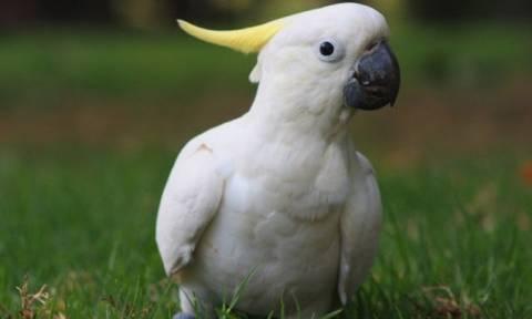 Τα πιο έξυπνα πουλιά του κόσμου! (photos)