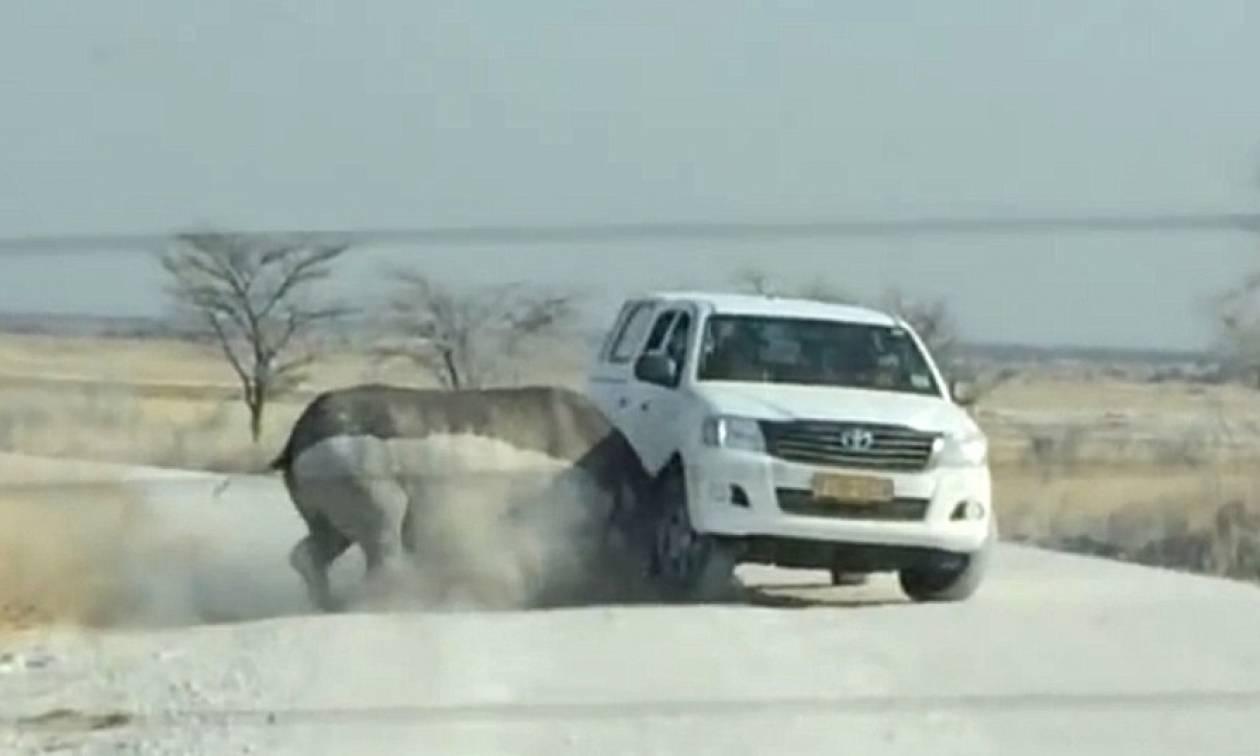 Τρομακτικό: Αφηνιασμένος ρινόκερος επιτίθεται σε τζιπ τουριστών (vid)