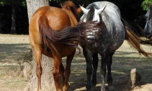 Άλογο τράκαρε με αυτοκίνητο στην Μακρακώμη