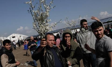 Ειδομένη: Πρόσφυγες έπλεξαν με λουλούδια τον φράχτη για να γιορτάσουν την άνοιξη