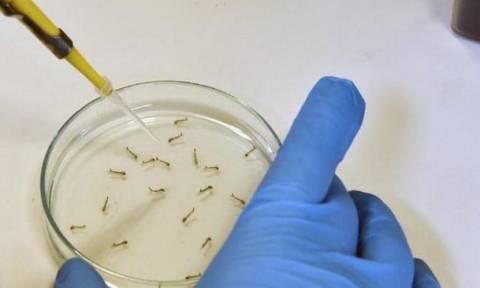 Πρώτο κρούσμα του ιού Ζίκα στη Σλοβακία