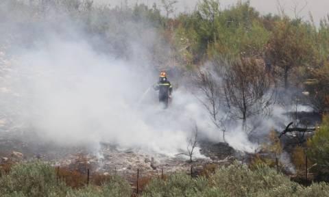 Ηλεία: Πάνω από 60 πυρκαγιές σε 72 ώρες
