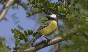 Ναύπακτος: Σύλληψη 59χρονου για κυνήγι άγριων πουλιών