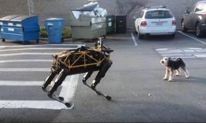 Δείτε το ρομπότ της Google να παίζει μαζί με έναν αληθινό σκύλο!