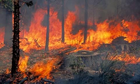 Μεγάλη φωτιά κατακαίει πευκοδάση στην Σκόπελο