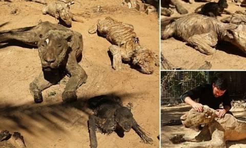 Ο πιο τρομακτικός ζωολογικός κήπος του κόσμου: Άγρια ζώα δίπλα σε κουφάρια (videos+photos)