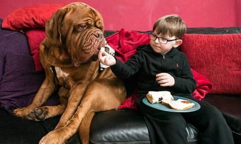 Πώς ο σκύλος μιας οικογένειας έσωσε την όραση του παιδιού τους