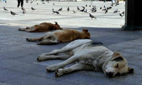 Τρίπολη: Ασυνείδητοι έριξαν δηλητηριασμένη τροφή και θανάτωσαν αδέσποτα σκυλιά
