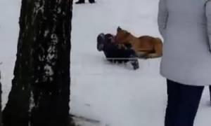 Ο απόλυτος τρόμος στα μάτια ενός αγοριού:  Το άρπαξε λιοντάρι από το λαιμό! (video)
