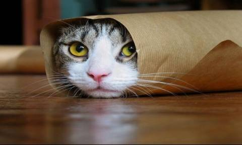 Καναδάς: Σε …κατ οίκον περιορισμό οι γάτες για να γλιτώσουν σπάνια είδη πουλιών!