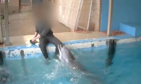 Σάλος: Εργαζόμενος σε ενυδρείο ικανοποιεί σεξουαλικά ένα… δελφίνι! (video)