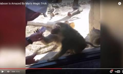 Το viral video της ημέρας: Μπαμπουίνος «τρελαίνεται» από ταχυδακτυλουργικό τρικ