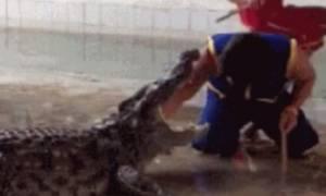 Βίντεο - σοκ: Γλίστρησε και έπεσε στο λάκκο με τους κροκόδειλους!