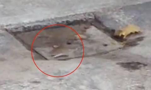 Ποντικάκι κάνει ασταμάτητα κύκλους για δύο ολόκληρες ώρες - Ο λόγος θα σας ανατριχιάσει (video)