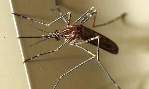 Πρώτο κρούσμα του ιού Ζίκα στη Ν. Κορέα