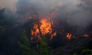 Χανιά: Πύρινη κόλαση στο Σφηνάρι Κισάμου - Προς τα σπίτια κατευθύνεται η φωτιά