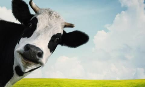 Υγειονομικός συναγερμός: Η «νόσος των τρελών αγελάδων» επιστρέφει στην Ευρώπη