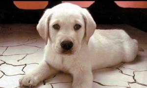 Θεσσαλονίκη: Κακοποίησε μέχρι θανάτου το τριών μηνών σκυλάκι του