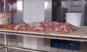 Σκάνδαλο: Κρέας πιθήκων - βαμμένες ελιές και «μαϊμού» ποτά που παράγονται στην Ελλάδα! (pics +video)
