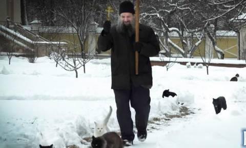 Γάτες στη Μονή Όπτινα συμμετέχουν στην καθημερινή πομπή (video)