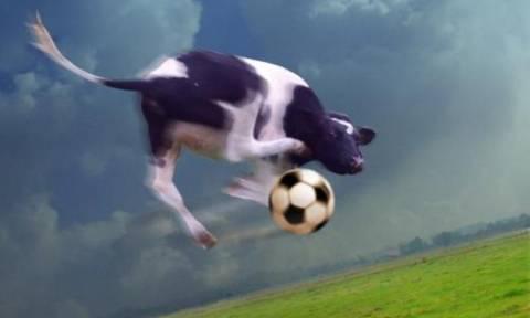 Παίζουν οι «τρελές αγελάδες» μπάλα;