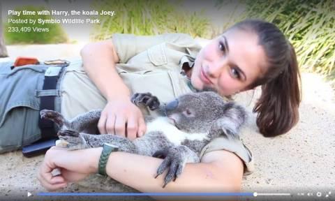 Η καλλονή ζωολόγος και το τυχερότερο κοάλα στον κόσμο (Vid)