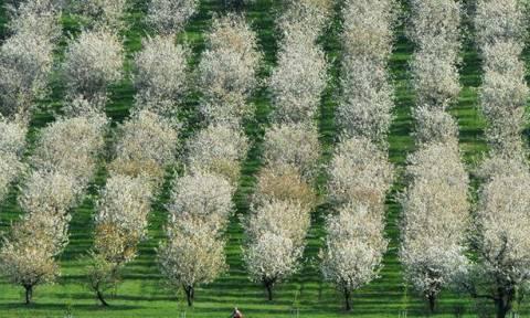 DW: Ευρωπαϊκό «καμπανάκι» για την κρίση στη γεωργία