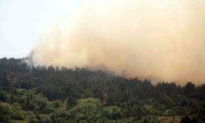 Συμβαίνει τώρα: Μεγάλη φωτιά στη Χάλκη Νεμέας