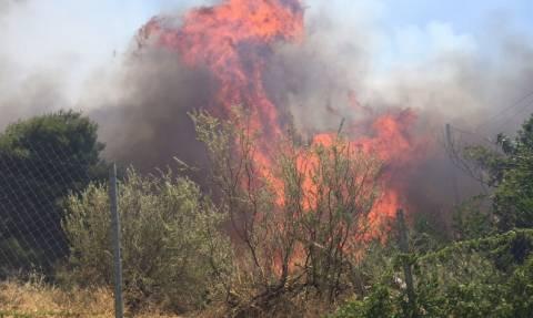 Υπό έλεγχο η μεγάλη φωτιά στην Χάλκη Νεμέας - Έγιναν στάχτη 150 στρ δασικής έκτασης
