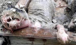 Μυθικά τέρατα αιματοκύλισαν χωριό στο Καζακστάν! Δείτε τι αιχμαλώτισαν και σκότωσαν χωρικοί (video)
