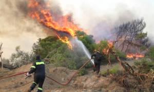 Τώρα: Μεγάλη φωτιά στη Σητεία